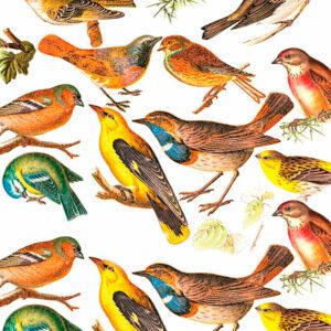 Papel encuadernación pájaros
